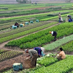 sistem logistik pertanian