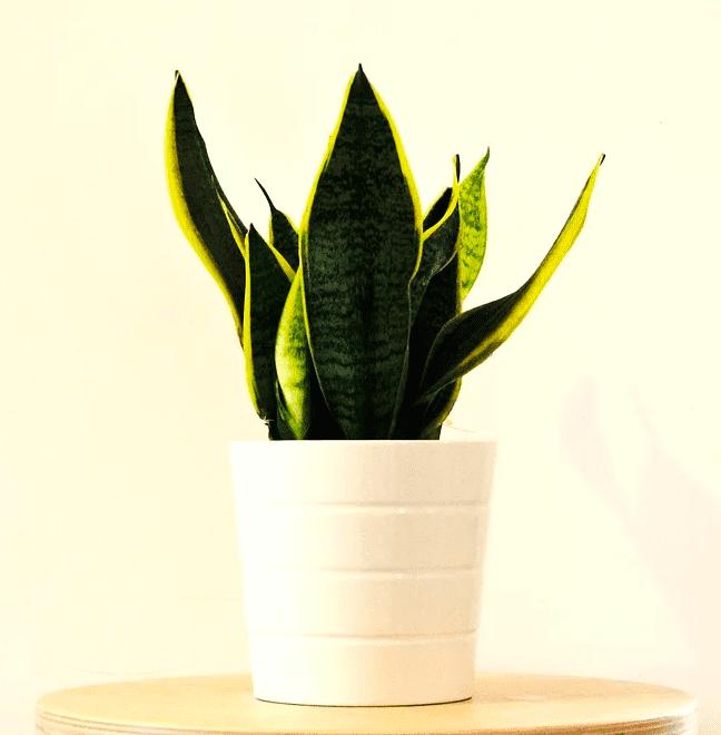 macam tanaman hias